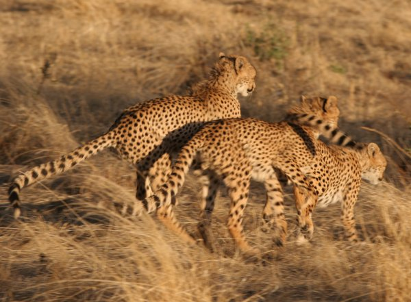 african_safari7