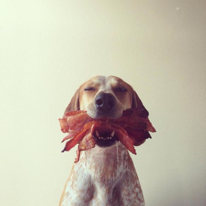 Dog Loves Bacon