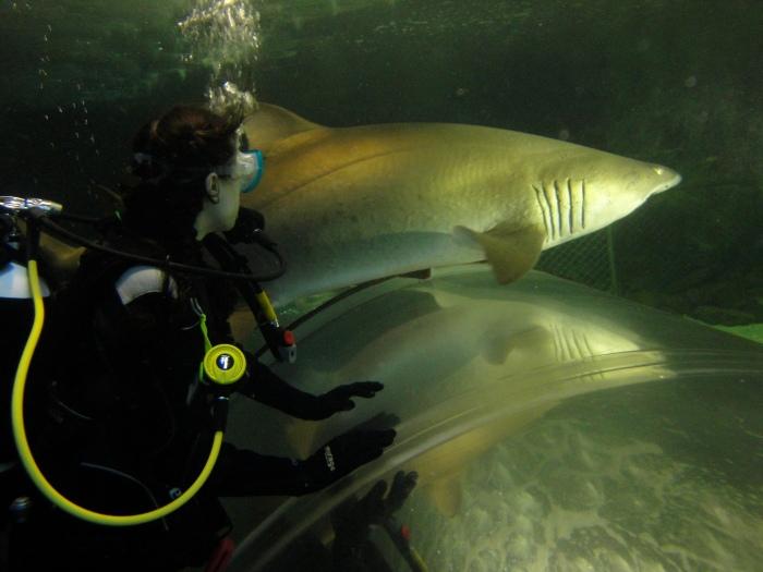 Sasha Grey Shark