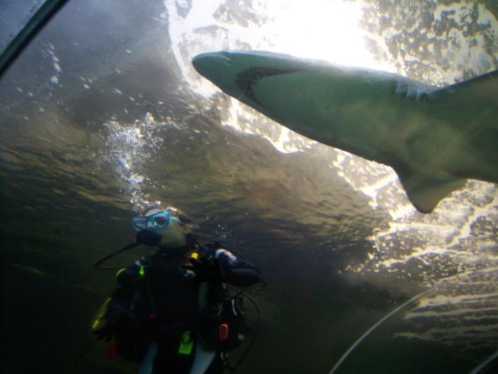 Sasha Grey Swims With Shark