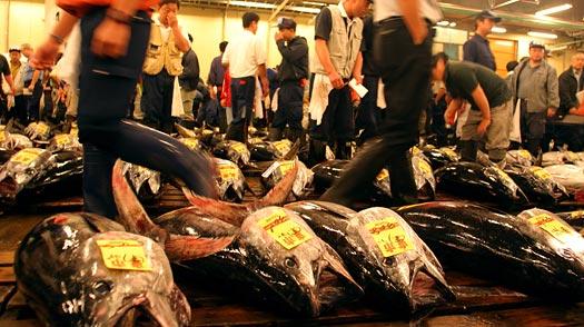 tokyo_fish_market