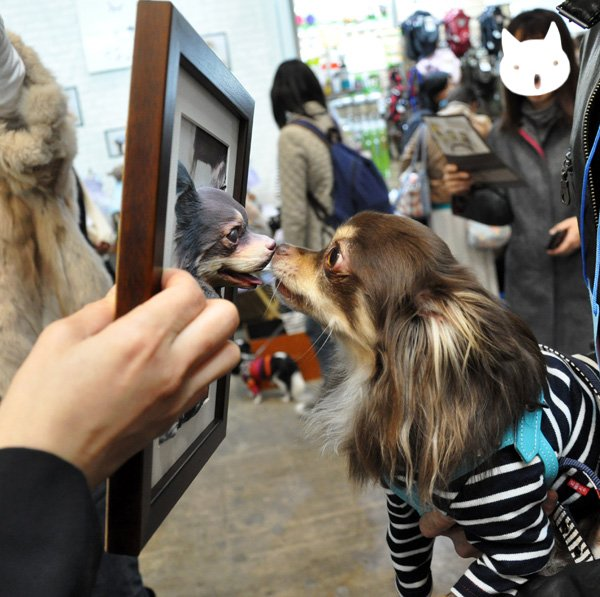 japanese animal cloning