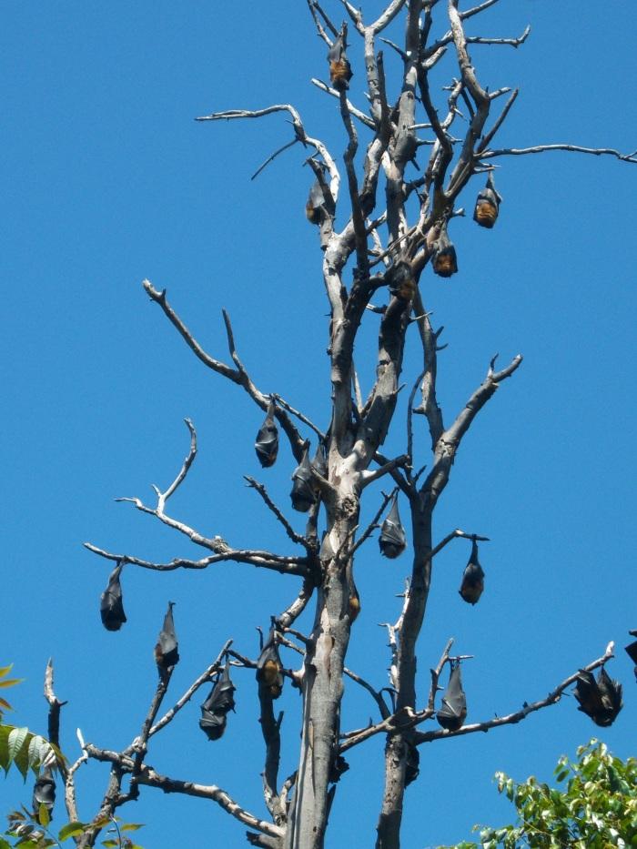 Sasha Grey Sydney Bats