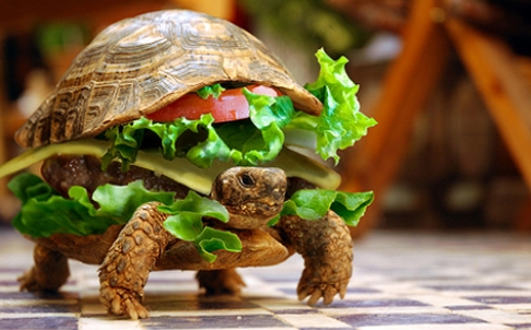 real turtle-burger