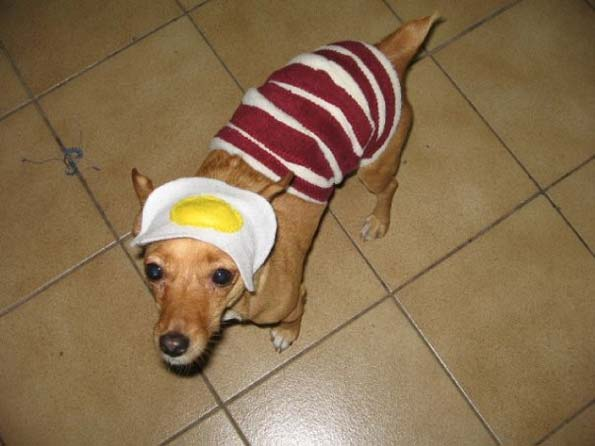 bacon and egg dog costume