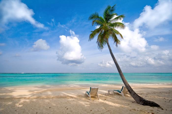 Anguilla-Beach-Palm-tree