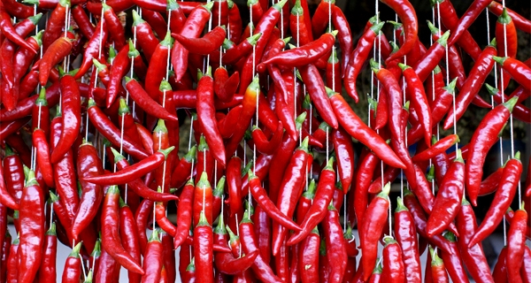 world's hottest chili peppers