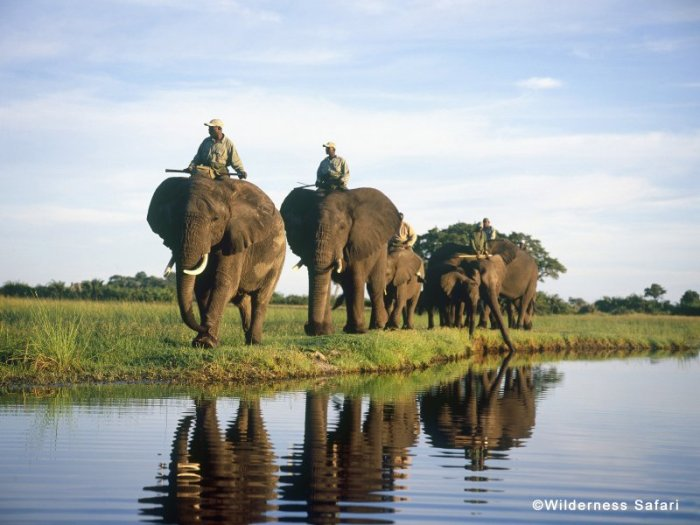 african elephant safari