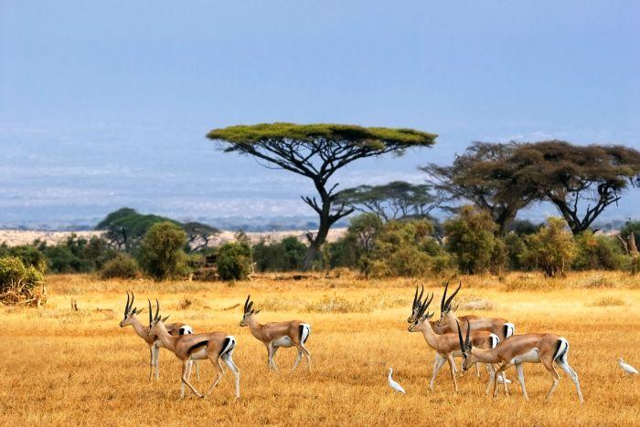 savanna-african-landscape-antelopes-safari-africa-savannah-antelope-landscape