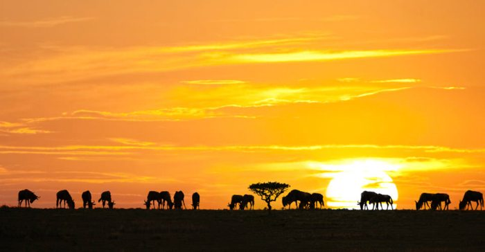 Africa-Tanzania-Migration-1-sunset