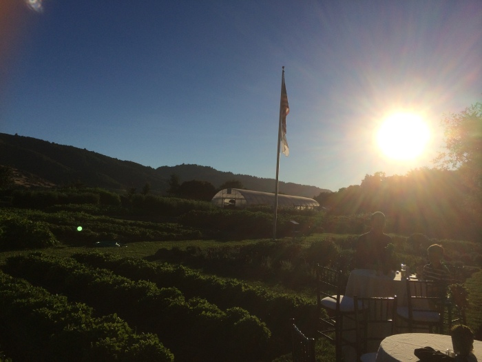 TFL Garden sunset