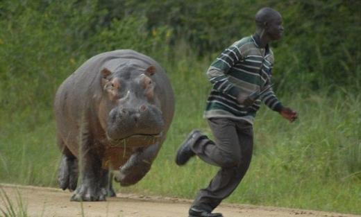dangerous safari animals