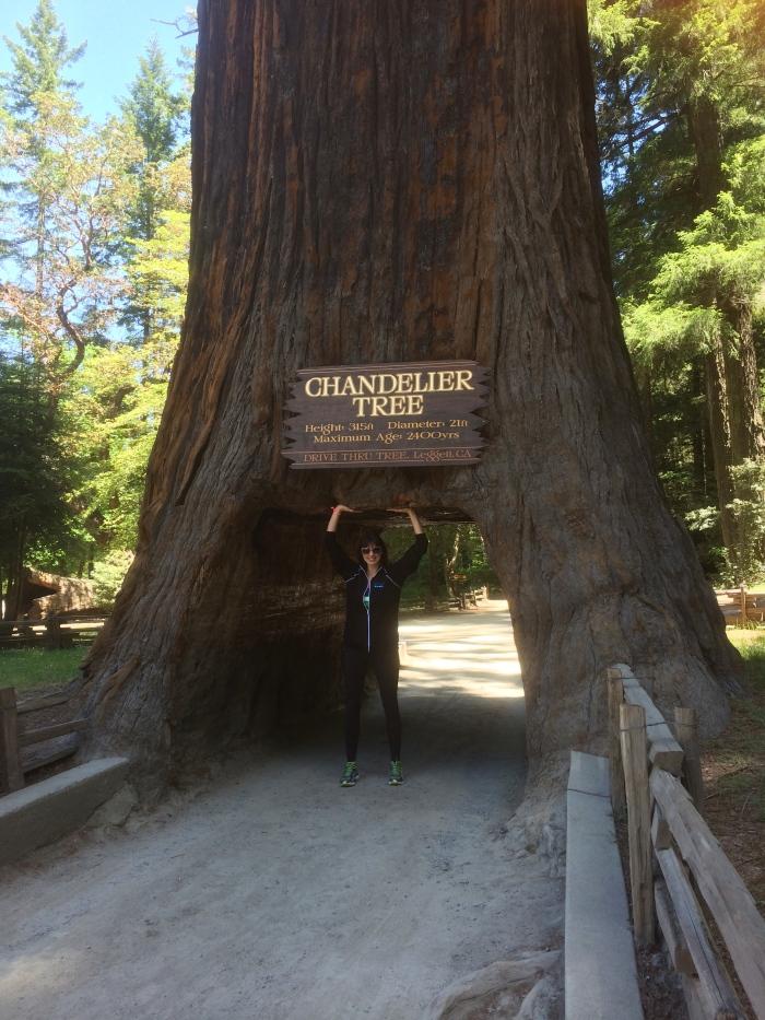 California drive through redwood tree