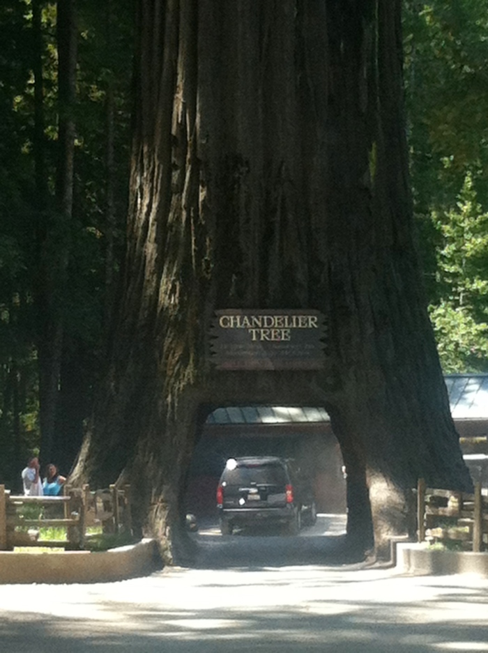 drive-thru redwood california