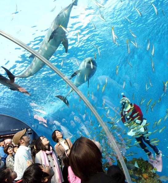 Japanese aquarium