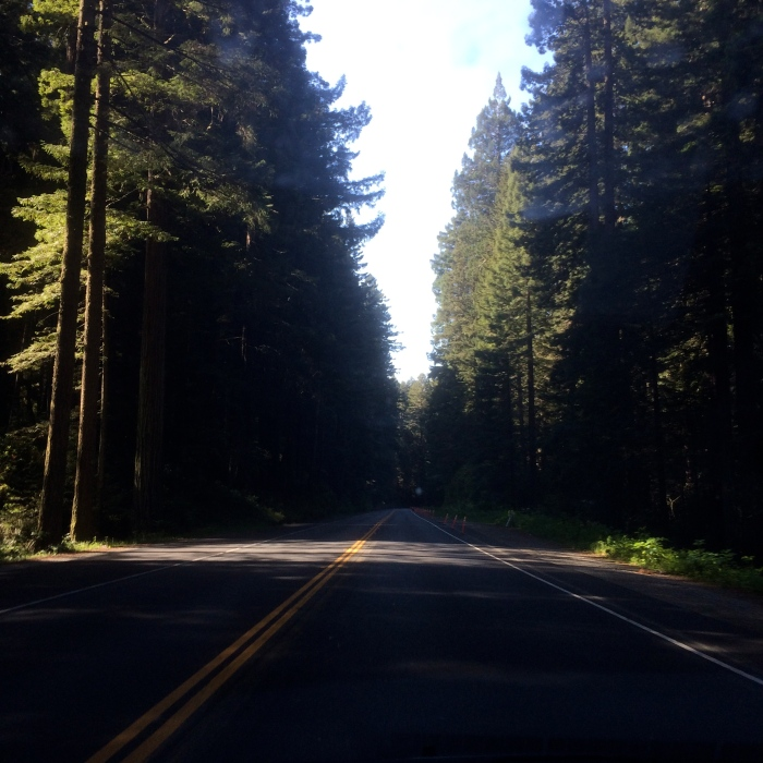 Northern California forests