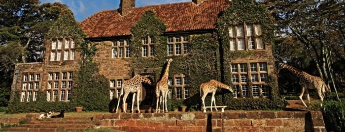 Giraffe Manor safari
