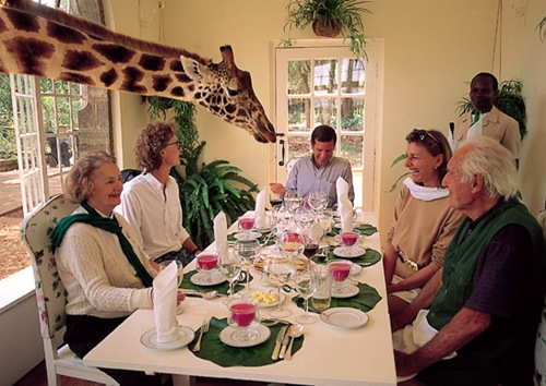 unique giraffe hotel