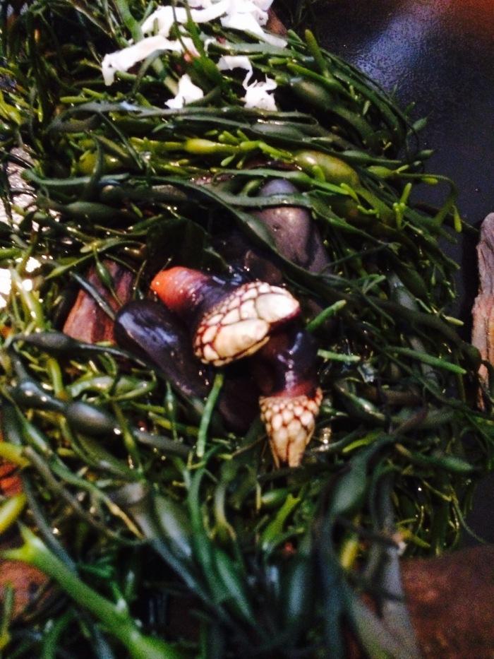 Alinea sea barnacle