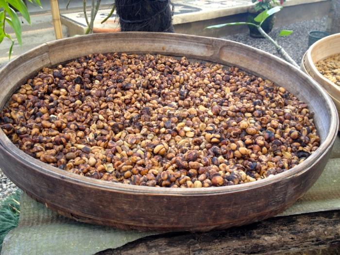 poop coffee beans