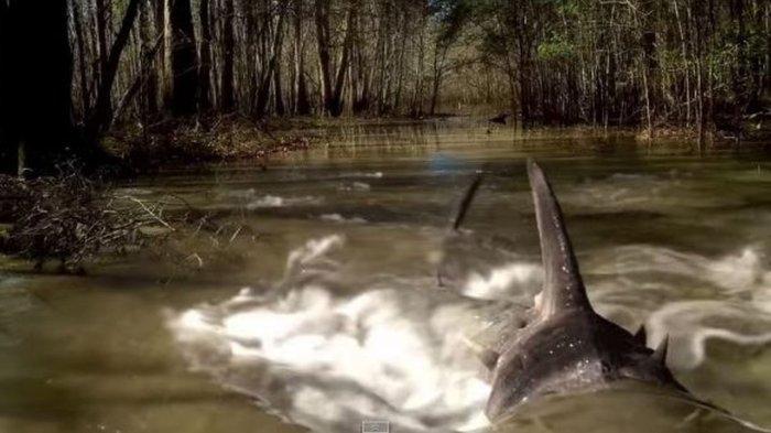 swamp sharks cult b movie