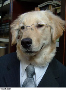 Dog-in-suit-with-glasses