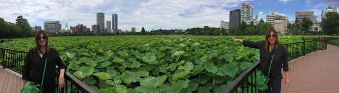 tokyo-water-lily-pond-panorama-alex-duda