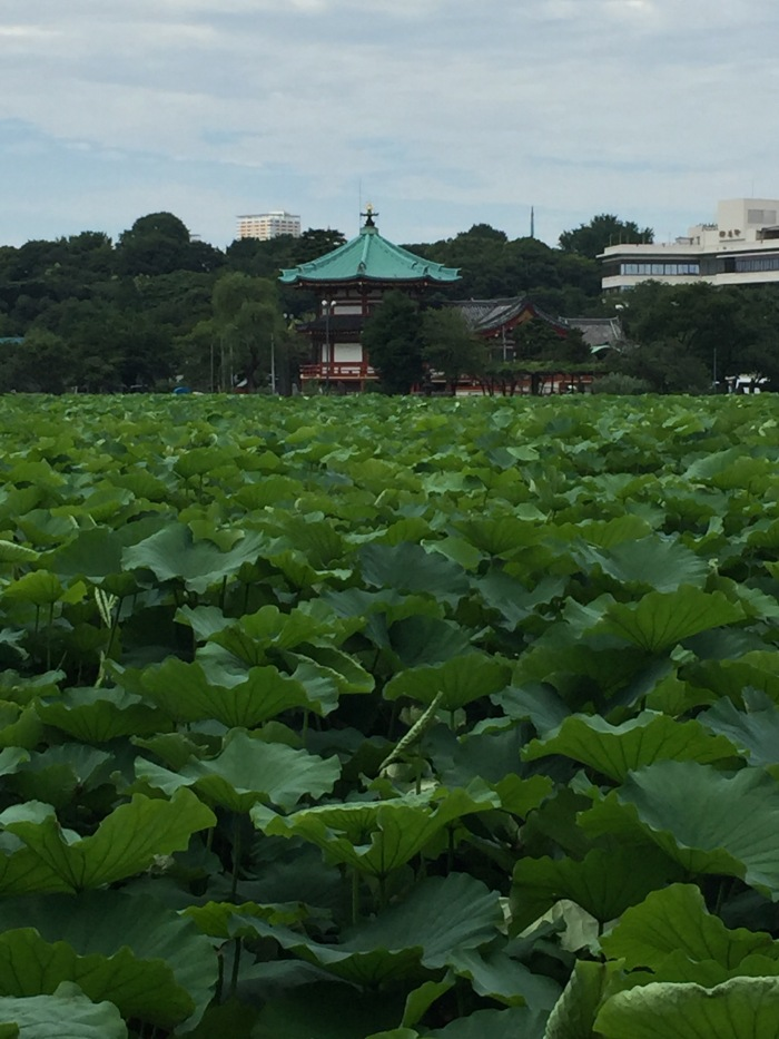 tokyo-water-lily-pond
