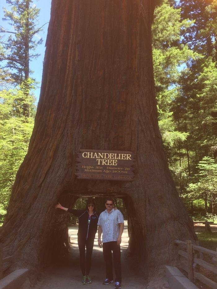 alex-duda-john-rieber-chandelier-tree