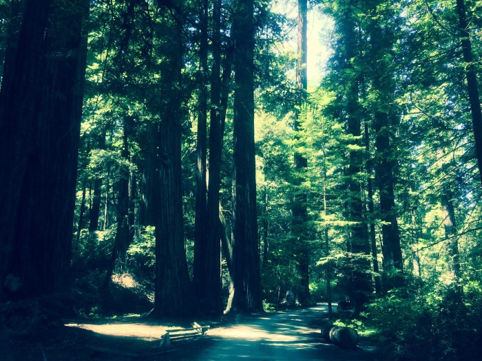 northern-california-redwood-forest