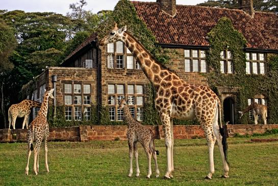amazing safaris